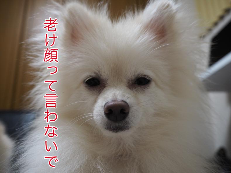 P8260470blog.jpg