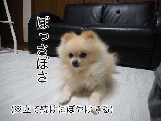 P8260475blog.jpg