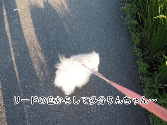 P9030560blog.jpg