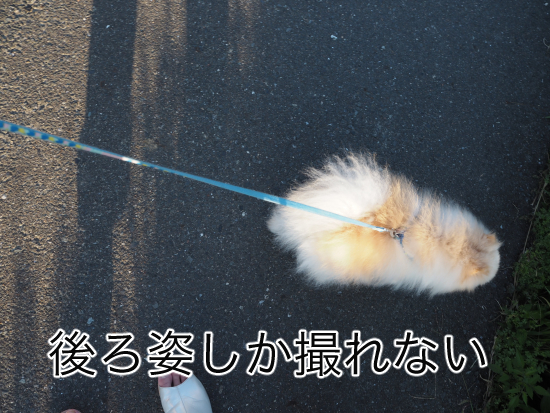 P9030561blog.jpg