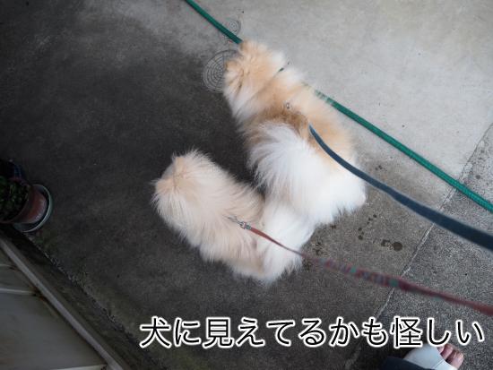 P9030564blog.jpg