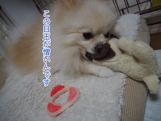 P9040571blog.jpg