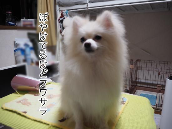 P9070668blog.jpg