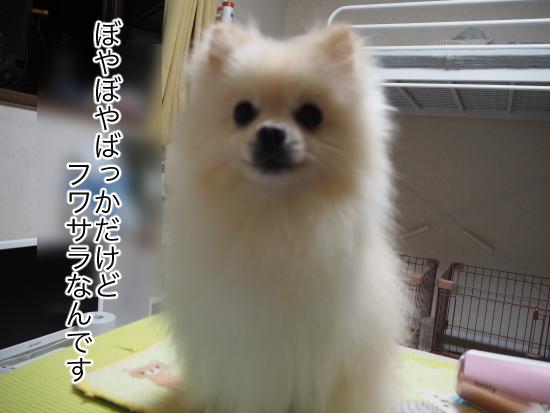 P9070675blog.jpg