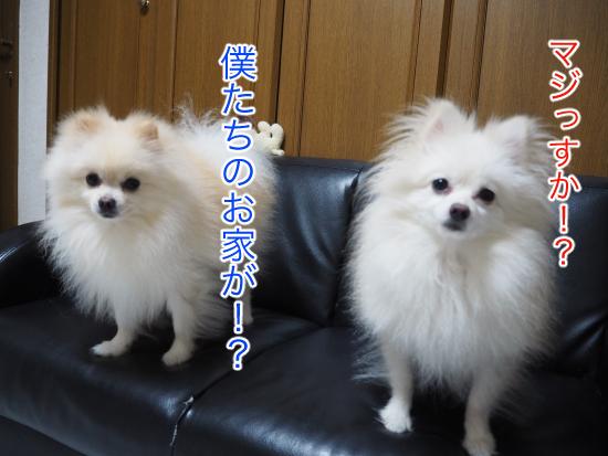 P9170729blog.jpg