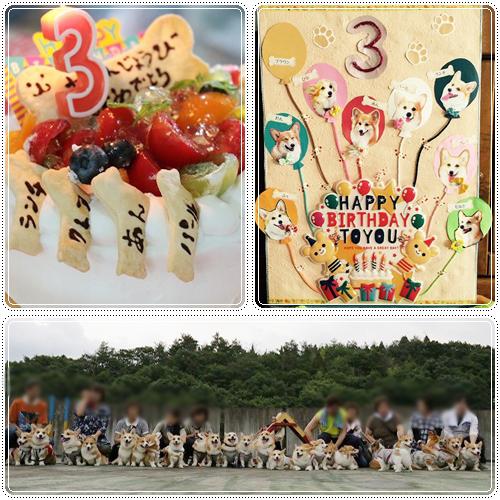 チームあずき3歳の誕生日会☆