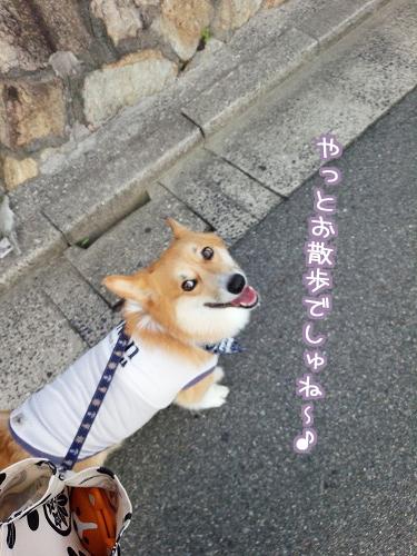 やっとお散歩