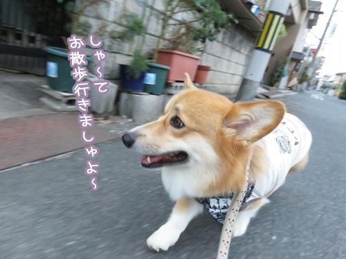 お散歩いきましょ~