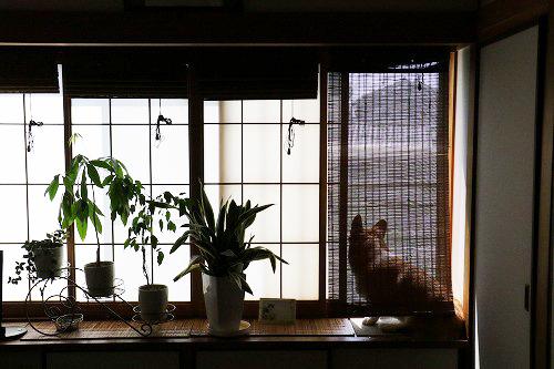 外を観てる