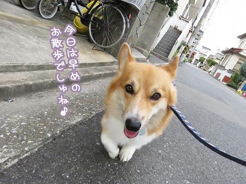 早めのお散歩