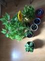 Pflanze3.jpg