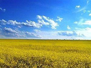 ウクライナの平野 Wikipediaより