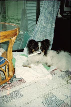 19950809-p.jpg