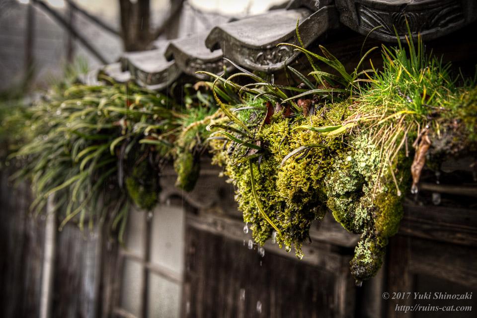 植物の繁茂する雨どい01