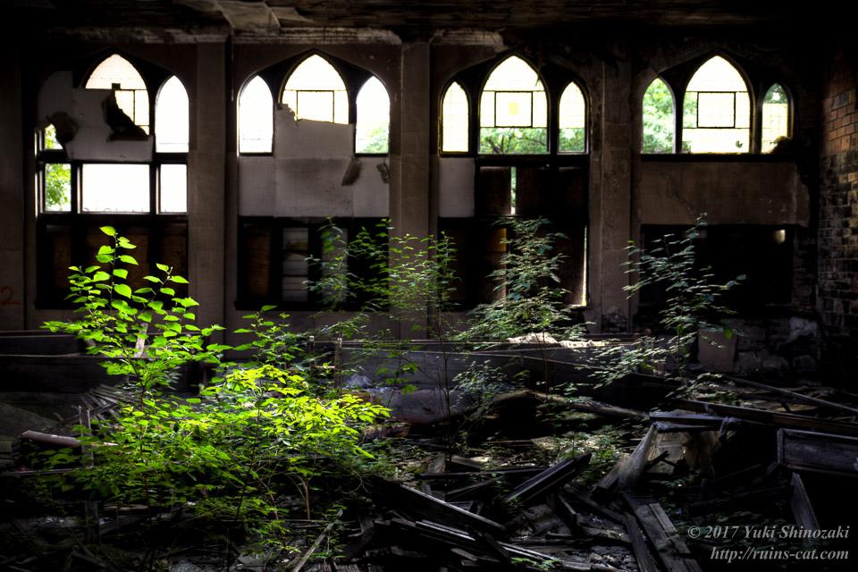 教会の礼拝堂に繁茂する植物
