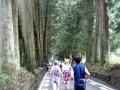 2017日光杉並木マラソン03