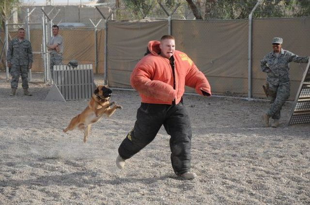 dog-training-iraq-army-scared-13591372839.jpg