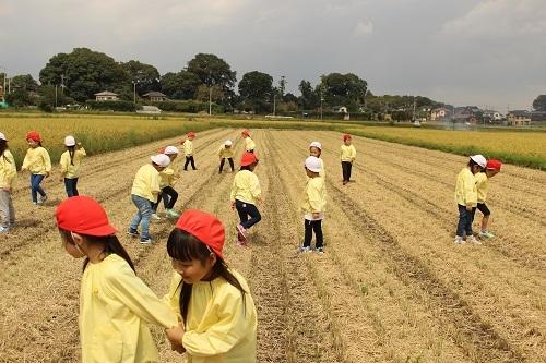 170911雪組稲刈り (5)