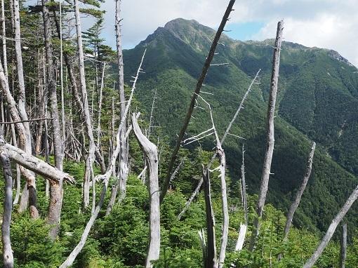 樹林帯から塩見岳