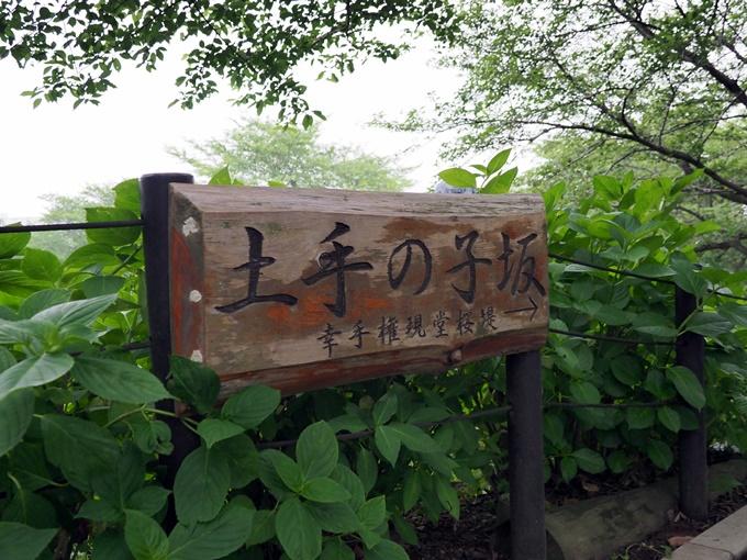blogP6251694.jpg