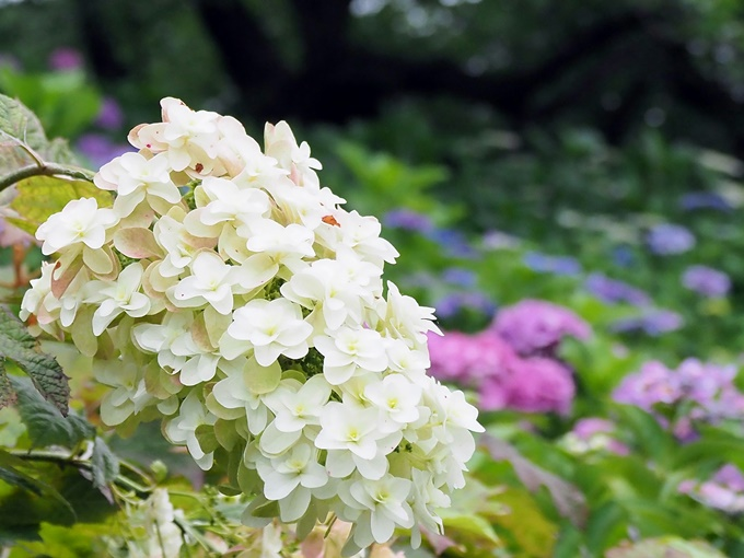 blogP6251809.jpg