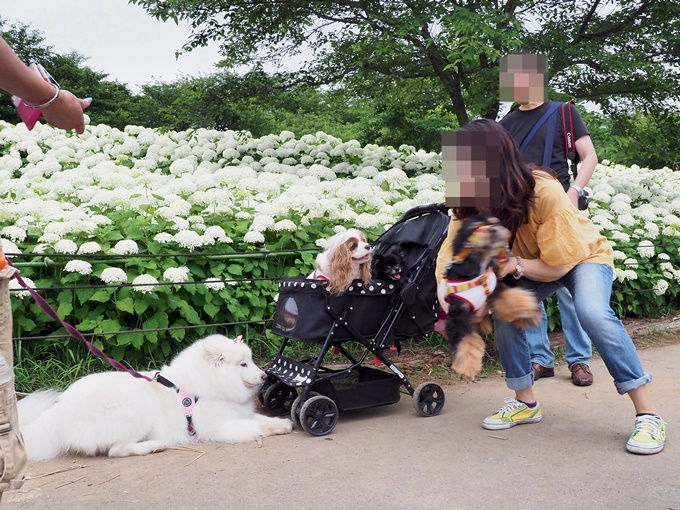blogP6252015.jpg