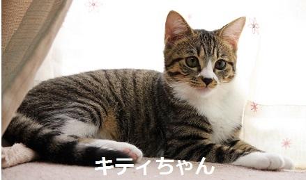 キティちゃん 猫
