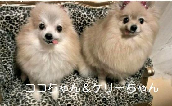 ココちゃん&ケリーちゃん