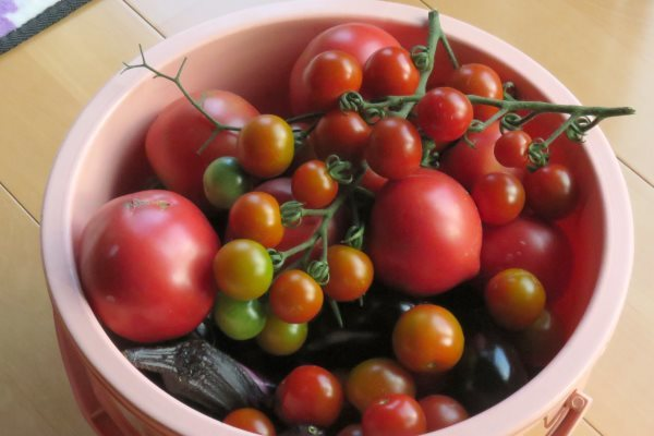 20170726_tomato.jpg