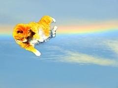空飛ぶニャンコ