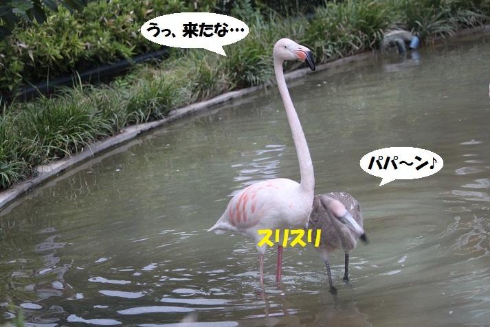 152 - コピー