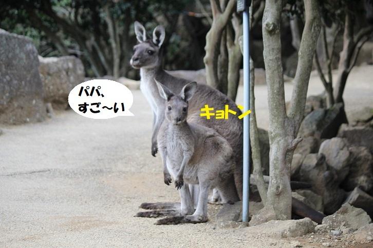 47 - コピー