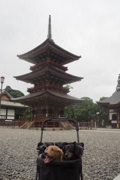 H29081108成田山新勝寺