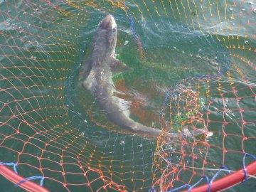(4)サメばっかり