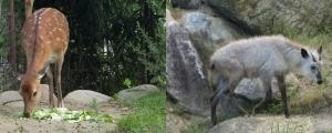 飯田動物10