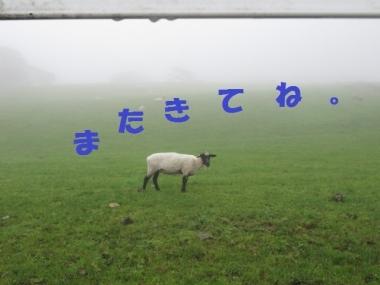 大笹牧場0813 145
