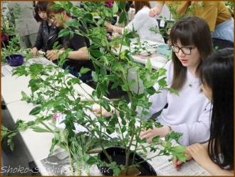 20170723  枝物  6   生け花