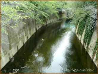 20170803  川  1   夏の神田川