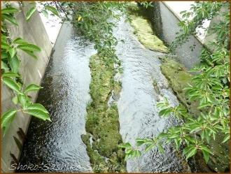 20170803  川  5   夏の神田川