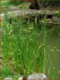 20170807  池周り  2    肥後細川庭園