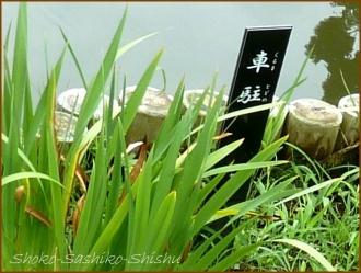 20170807  池周り  4    肥後細川庭園