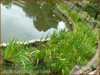 20170807  池周り  7    肥後細川庭園