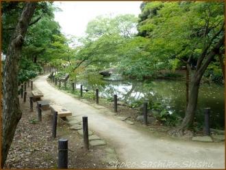 20170807  庭  3    肥後細川庭園