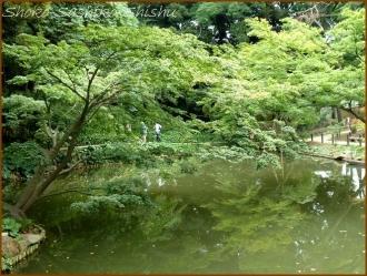 20170807  庭  6    肥後細川庭園