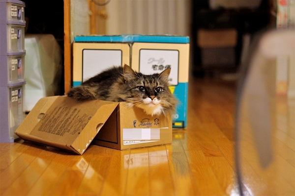 箱あるある2