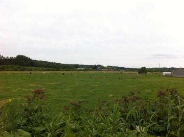 広大な牧場風景