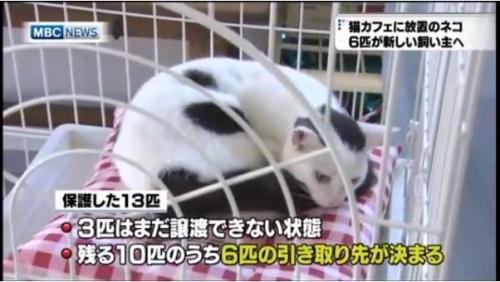 保護猫001