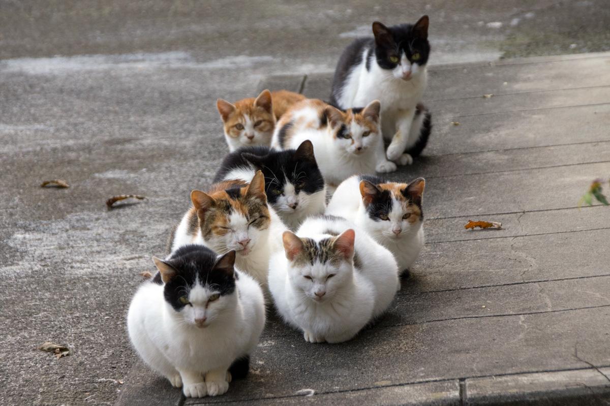 猫の集会 画像 意味 秘密2