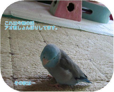 ④アオ君(´・ω・`)