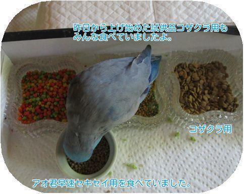 ⑦ペレット良く食べる